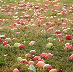 Āboli dārzā
