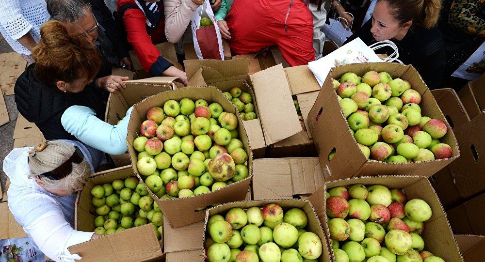 Яблоки, архивное фото