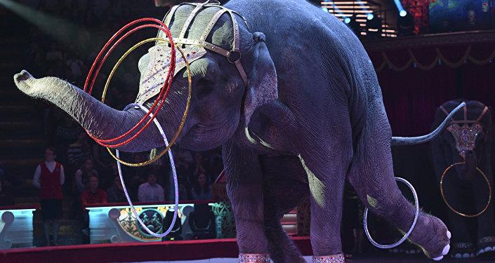 Слон во время циркового номера. Архивное фото