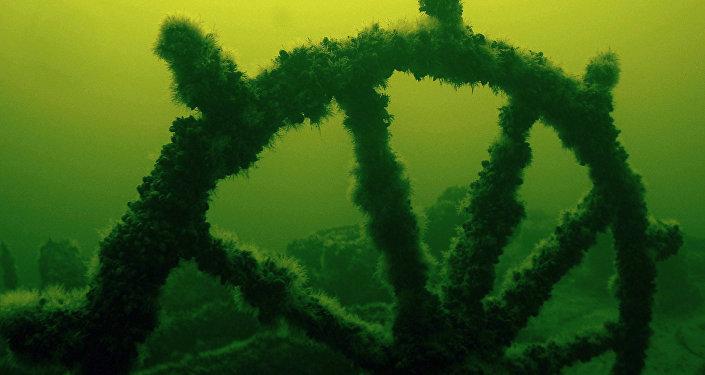 Gliemežvākiem un ūdenszālēm apaugusi kuģa stūre