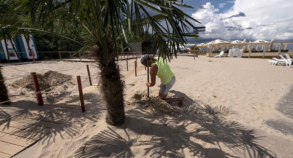 Пальма на берегу в Юрмале. Архивное фото