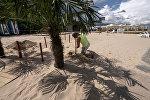 Пальма на берегу в Юрмале, архивное фото