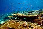 Коралловый риф в Красном море на территории Национального заповедника Набк