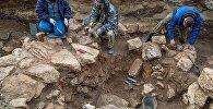 Археологи ведут раскопки. Архивное фото