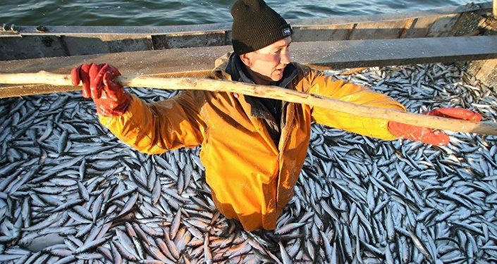 Reņģu zveja. Foto no arhīva