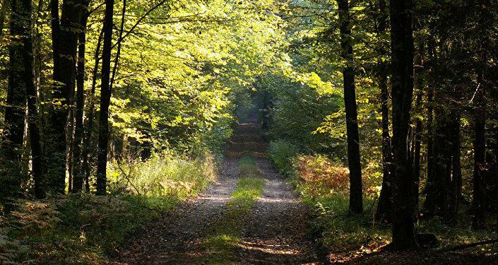 Belovežas gārša Polijā. Foto no arhīva