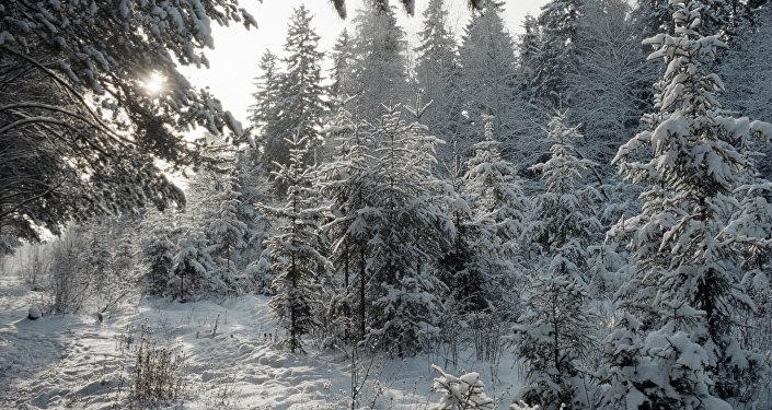 Зимний лес. Архивное фото