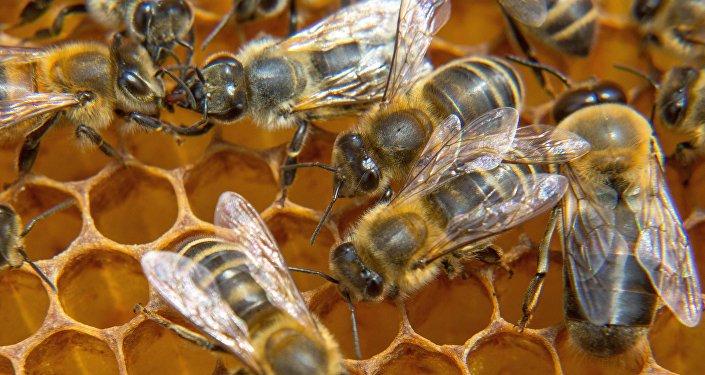 Bites dravā. Foto no arhīva