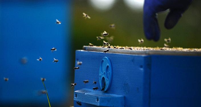 Armands Krauze sola novietot Rīgas domē bišu stropus