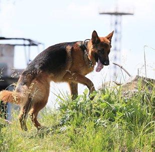 Lietuvas Seima vicespīkera brālis nošāvis robežsargu suni. Foto no arhīva