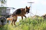 Suns. Foto no arhīva
