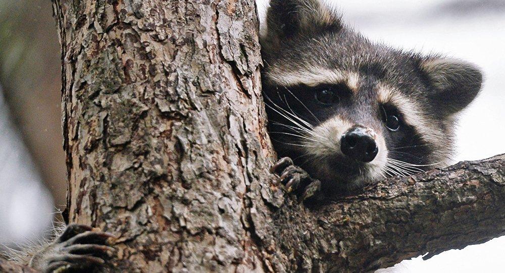 Рижский зоопарк приглашает наДни зверей людей с«звериными» фамилиями