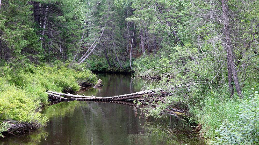 Tiltiņš pāri taigas upei pa ceļam uz Elka klinti