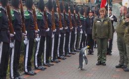 Пингвин по кличке Нильс Улаф III стал генералом Королевской гвардии Норвегии