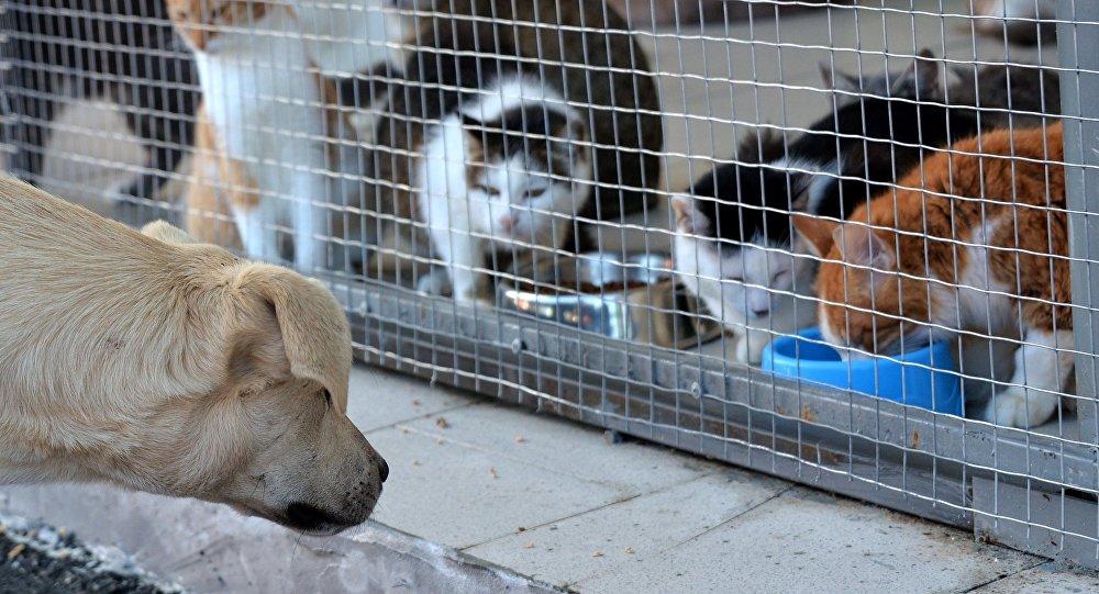 Dzīvnieku pātversme. Foto no arhīva