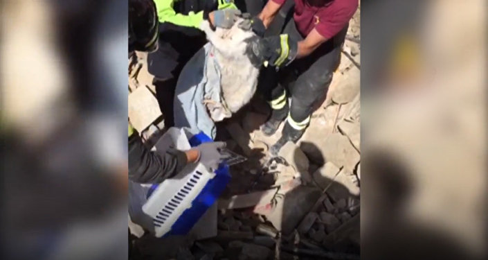 Воля к жизни: кот провел под руинами 16 суток после землетрясения в Италии