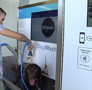 Ванная для собак, или Как в Нидерландах моют питомцев вместе с машинами