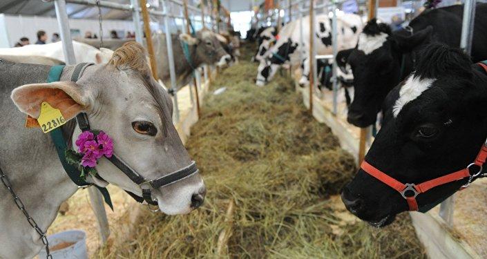 Piena iepirkuma cenas Latvijā – zemākās ES
