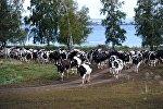 Полевая ферма