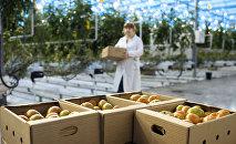 Latvijā ir palielinājusies teritorija organiski tīras produkcijas ražošanai