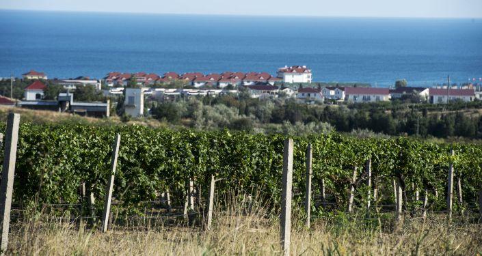 Vīna kalni Koktebelas ciematā Krimā. Foto no arhīva