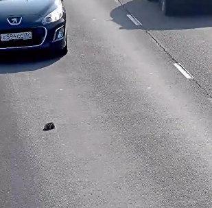 Водитель спас котенка на дороге в Калининграде