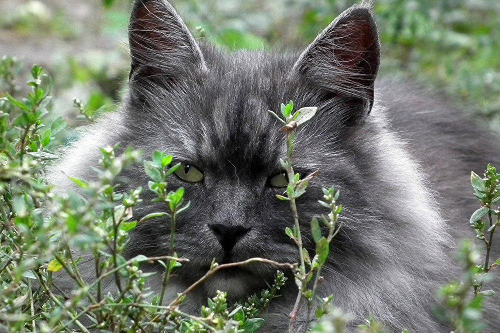 Согласно ученым, мурлыканье кошек  варьируется в частотах между 50−150 герц