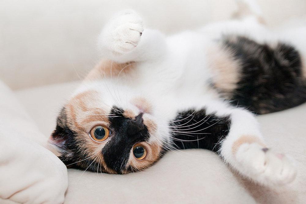 Кошки,  отмечают ученые, могли эволюционно выработать механизм, который излечивает и их самих, и тех, кто рядом с ними.