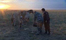 Krievijas prezidents Vladimirs Putins  apmeklēja Orenburgas valsts dabas rezervātu