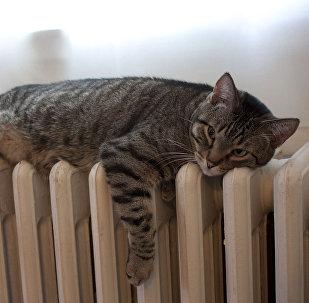 Kaķis uz radiatora. Foto no arhīva