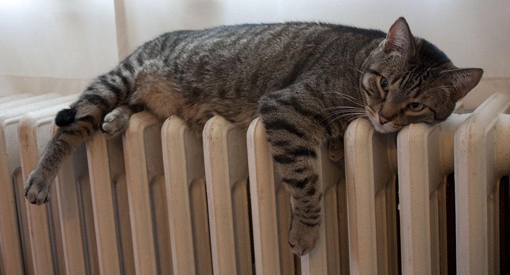 Кот на батарее отопления, архивное фото