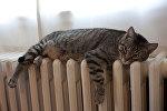Кот на батарее отопения