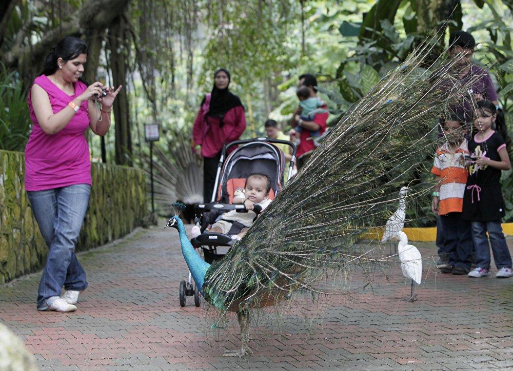 Putnu parka iemītnieki Kualalumpurā nepazīst krātiņus – viņi pārvietojas pa visu teritoriju, ko sedz kopējs tīkls. Atsevišķā paviljonā izvietots inkubators, kurā apmeklētāji var vērot putnēnu izšķilšanos. Tomēr daudzi putni neizmanto personāla pakalpojumus un dod priekšroku savām ligzdām.