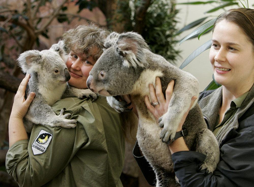 Edinburgas zooparks ir vienīgā organizācija Apvienotajā Karalistē un viena no nedaudzajām Eiropā, kas var palepoties ar koalām savā kolekcijā. Diviem tēviņiem un mātītei pat iestādīts liels eikaliptu dārzs.