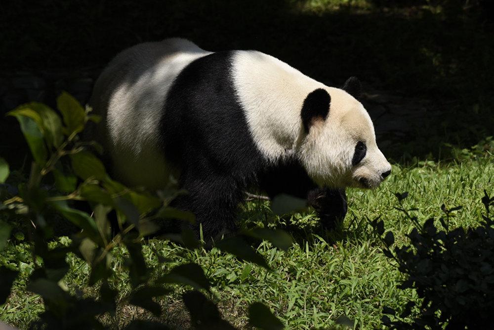 Viens no vecākajiem zooparkiem ASV tika atklāts 1889. gadā, un kopš tā laika tajā tiek izstrādātas izmirstošo sugu saglabāšanas zinātniskās programmas. Parka slavenākie un iemīļotākie iemītnieki ir četras gigantiskās pandas.
