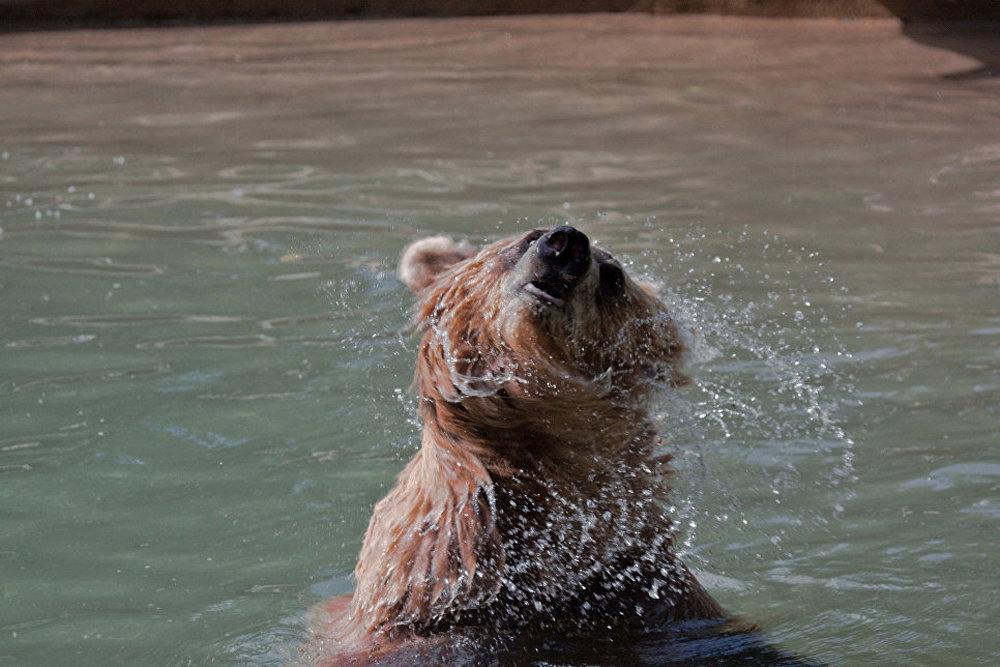 Lielākajā zooparkā Kanādā mīt dzīvnieki no dažādām pasaules valstīm, taču apmeklētāji īpaši iemīļojuši baltos lāčus, ko zooparks izmitināja pie sevis 2009. gadā.