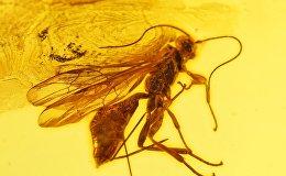 Līdz VIII gadsimtam dzintaru mēdza dēvēt par sastingušu saules staru, pārakmeņojošus jūras putu gabalu, sastingušam putnu asarām un uzskatīja pat par kukaiņu vielmaiņas produktu.