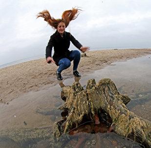 Relikta koku atliekas Baltijas jūras krastā.