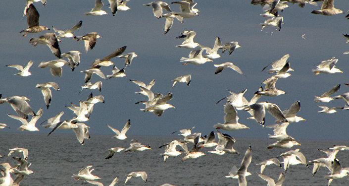 Чайки на побережье, архивное фото