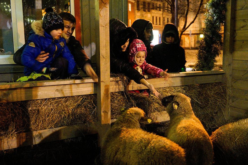 Bērni un pieaugušie ir sajūsmā no aitiņām