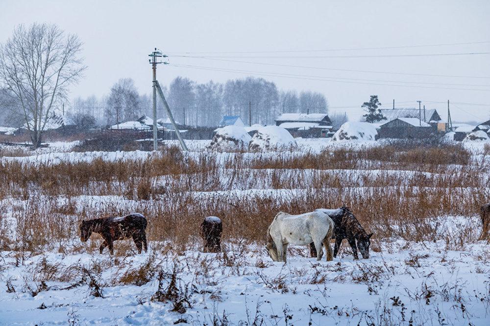Sibīrija visā krāšņumā: Naivie ceļotāji Omskas apgabalā