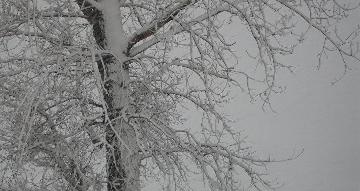 Nākamnedēļ iespējami līdz šim stiprākie sniegputeņi un lielākais sals šoziem