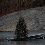Рождественская ёлка в Центральном парке на Манхэттене в Нью-Йорке