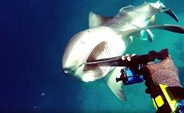 Схватка между дайвером и акулой