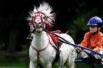 Скачки конный клуб дети. Архивное фото