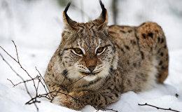 Дикие животные Латвии в природном заповеднике Лигатне