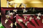 Улей с пчелами