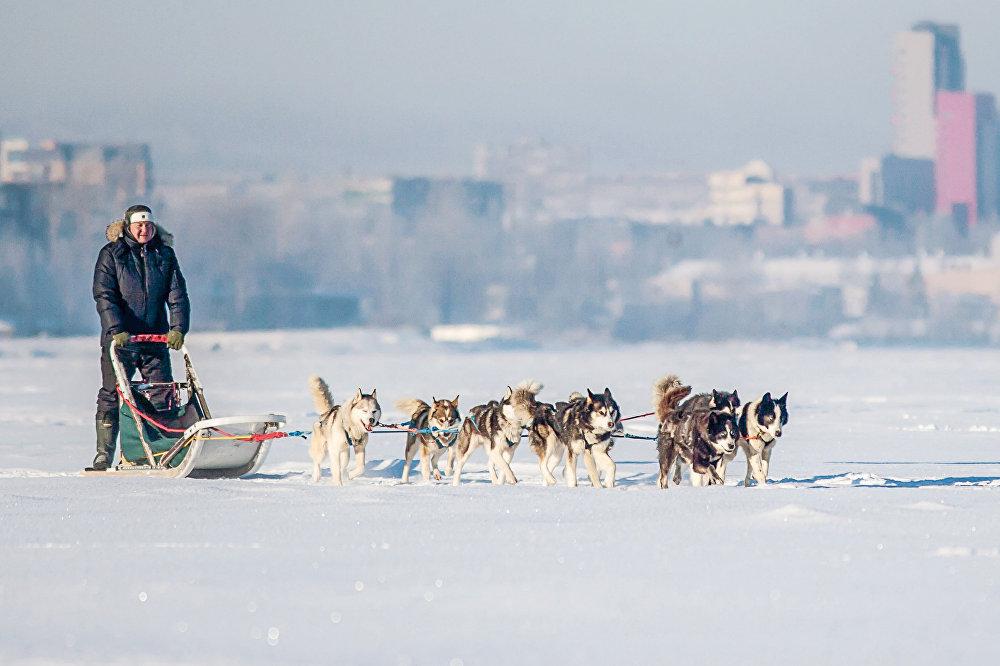 Экспедиция на собачьих упряжках Великая Андома. Тайна трех океанов в Карелии