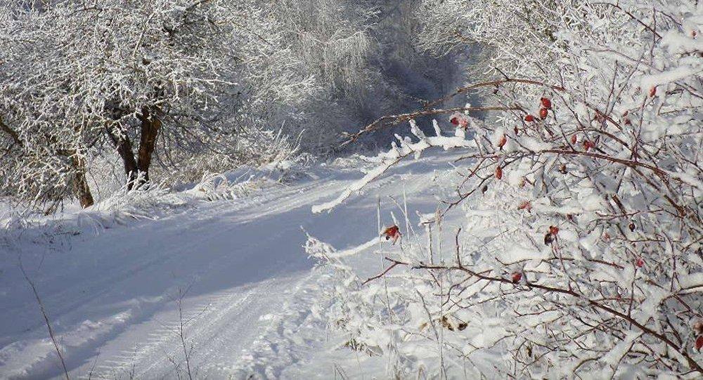 Koki sniegā. Foto no arhīva