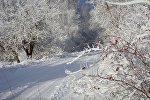 Зимняя дорога и деревья в снегу